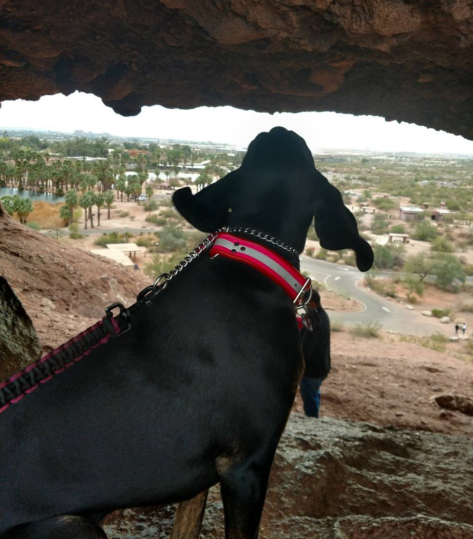 Daisy Mae, the oldest of Laurel Darren's two Plott Hounds, takes a moment to peer through a rock formation with her owner at one of the trademark Southwestern vistas seen on Phoenix hiking tours.