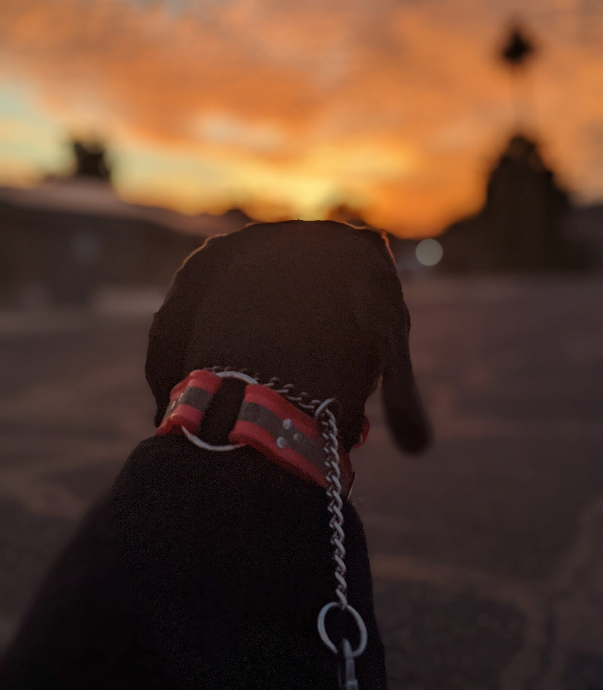 A gorgeous Arizona sunrise is among the fringe benefits of hiking early in the morning with your dog in Phoenix. The cooler temperatures are a bonus for our furry friends, too.