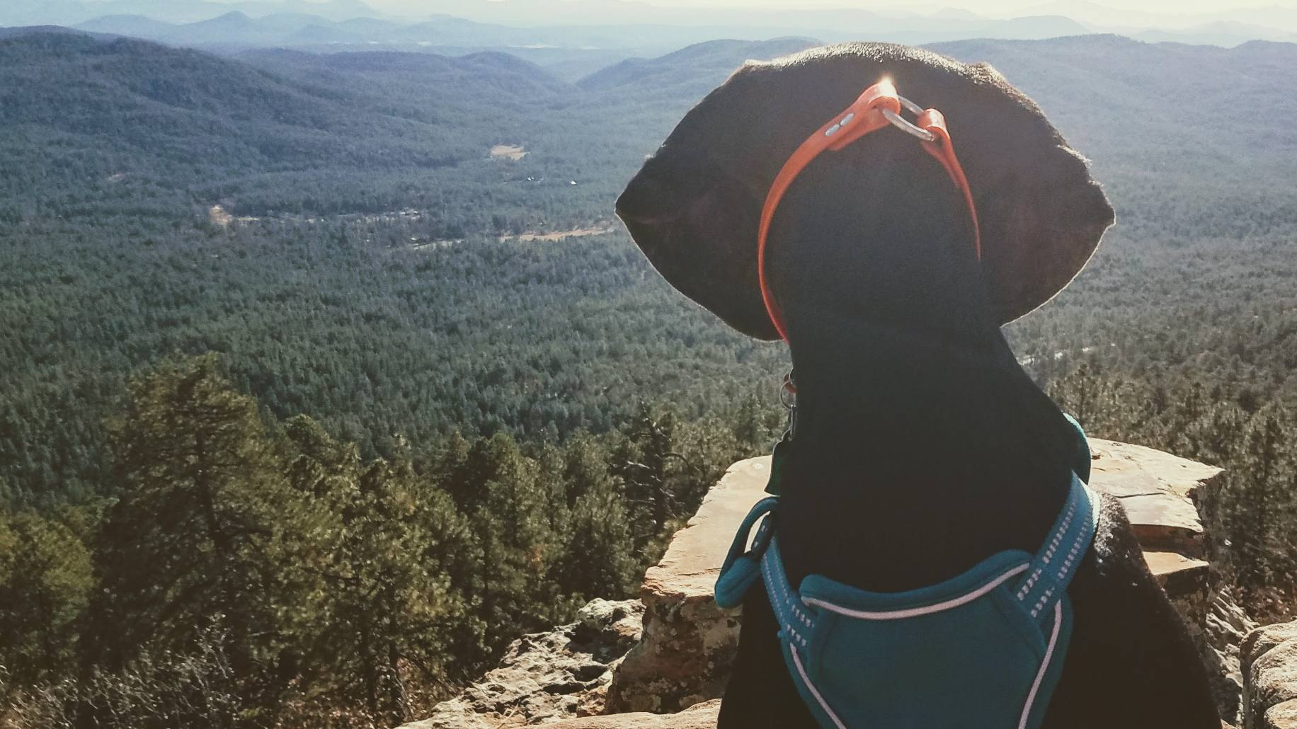 Waylon scans the vast natural beauty in the Valley of the Sun. Phoenix & Scottsdale is among the top areas in the country for hiking, with hundreds of miles of dog-friendly trails to offer visitors and their pooches.