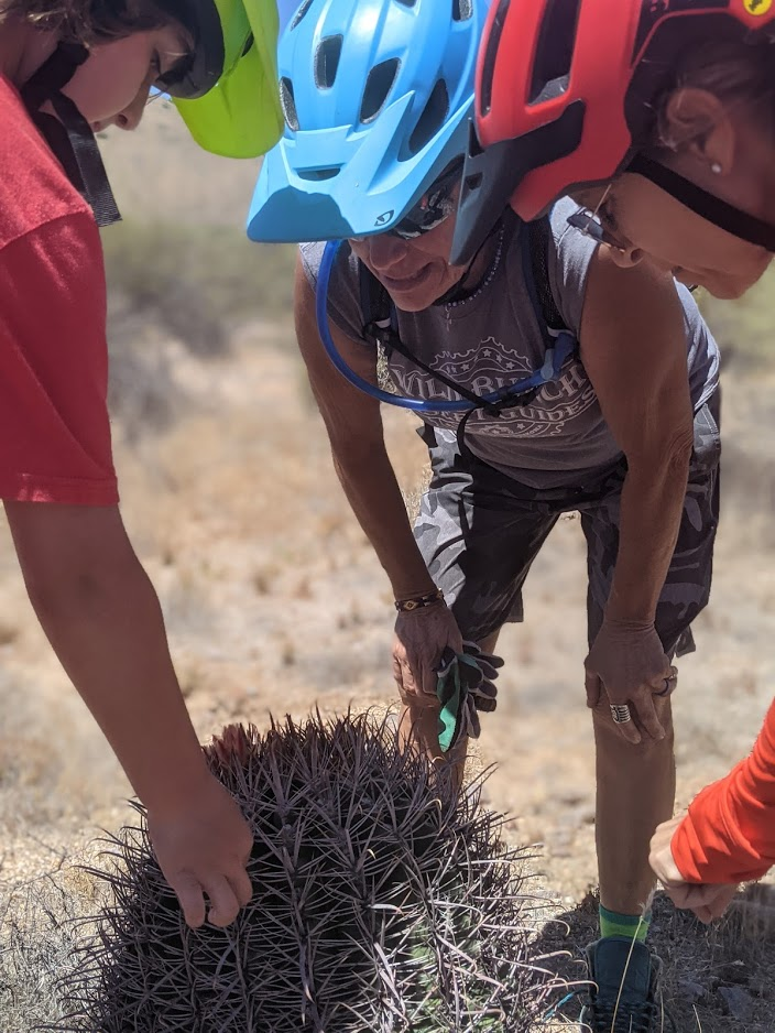 Because of our Memorial Day heroes, Americans are allowed to travel freely in their country and are exposed to all sorts of experiences. (Pictured) A Wild Bunch guide (right) shows a group of children one of the many species of cactus in Arizona's Sonoran Desert.